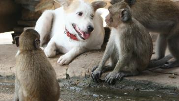 dogandmonkeys