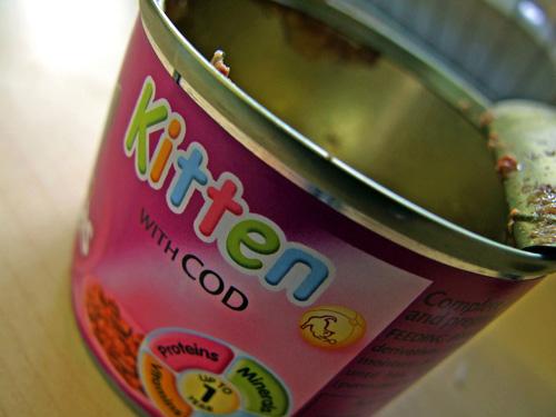 Funny foods: Kitten in Cod
