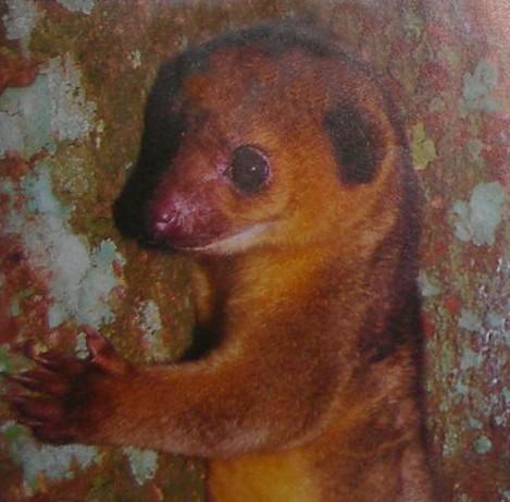 The Most Unusual Looking Animals Daddu