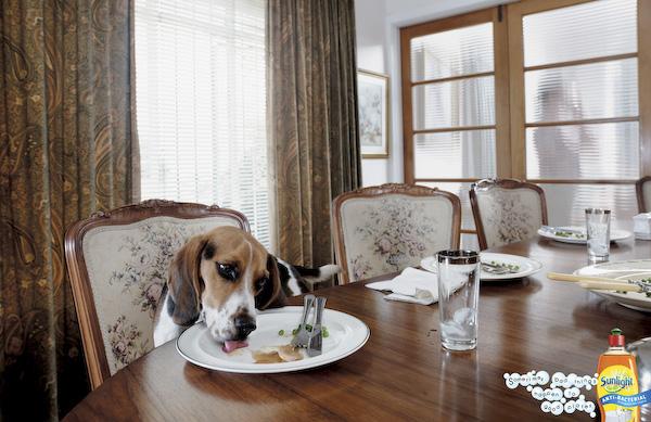 Psi v reklamě - nejlepší psí reklamy