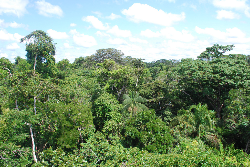 amazon rainforest south america - photo #29