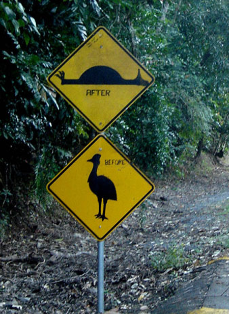 Cassowary: Before-After