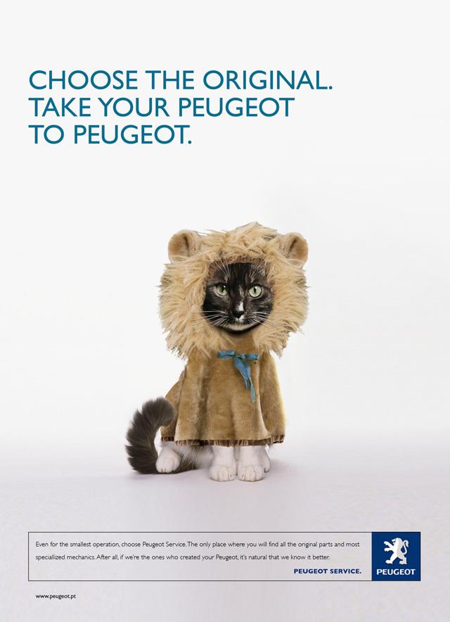 Cute Cat Ads - Daddu