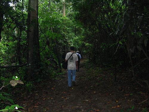 Amazon Rainforest - Trail