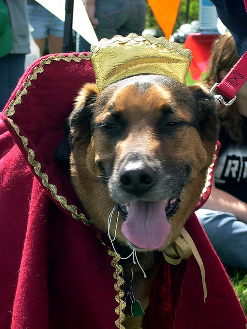 Dog in King Costume