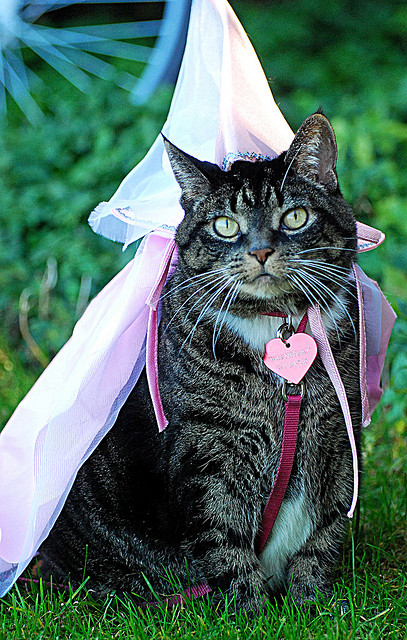 Cat in Princess Costume