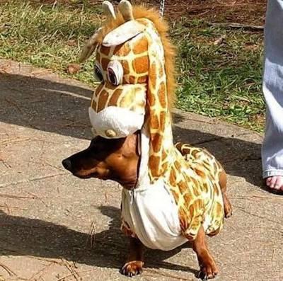 Dog Giraffe Costume