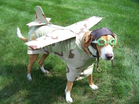 Dog in Plane Costume