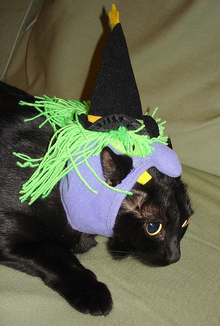 Cat in Witch Costume