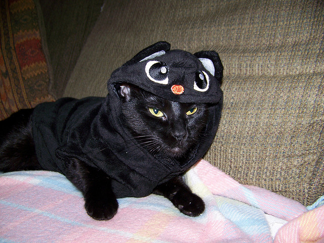 ... Black Cat in Black Cat Costume & Pets on Parade: Dogs and Cats in Halloween Costumes