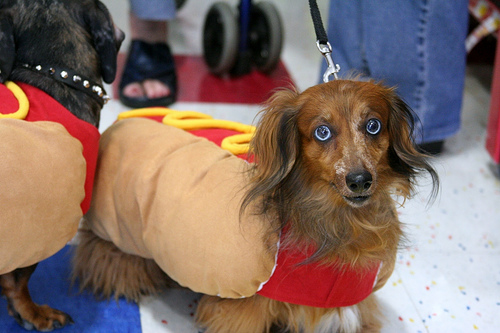 Dog in Hot Dog Costume