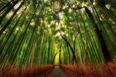 Sagano-Bamboo-Forest, Kyoto