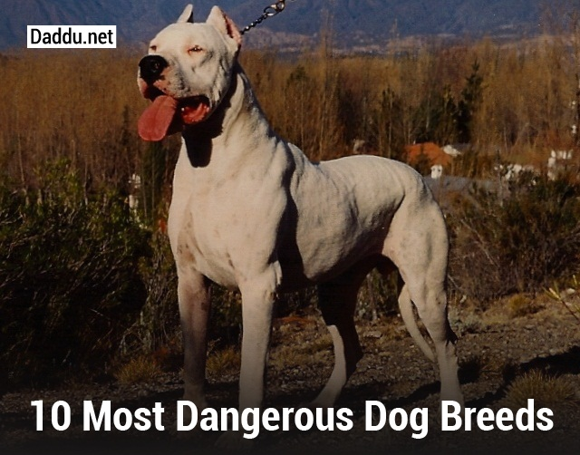 Most Dangerous Dog Breeds In The Us