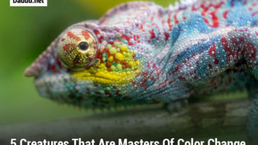 5 CREATURES THAT ARE MASTERS OF COLOR CHANGE