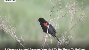 6 STRANGE ANIMAL SWARMS YOU HAD TO BE THERE TO BELIEVE