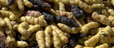 10-most-unusual-vegetables-you-have-never-seen